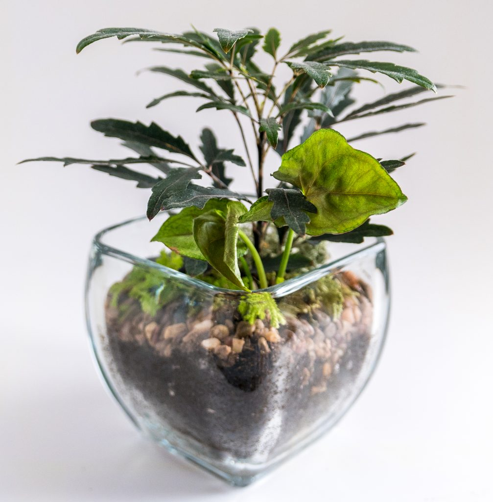 Travel and terrariums - glass planter