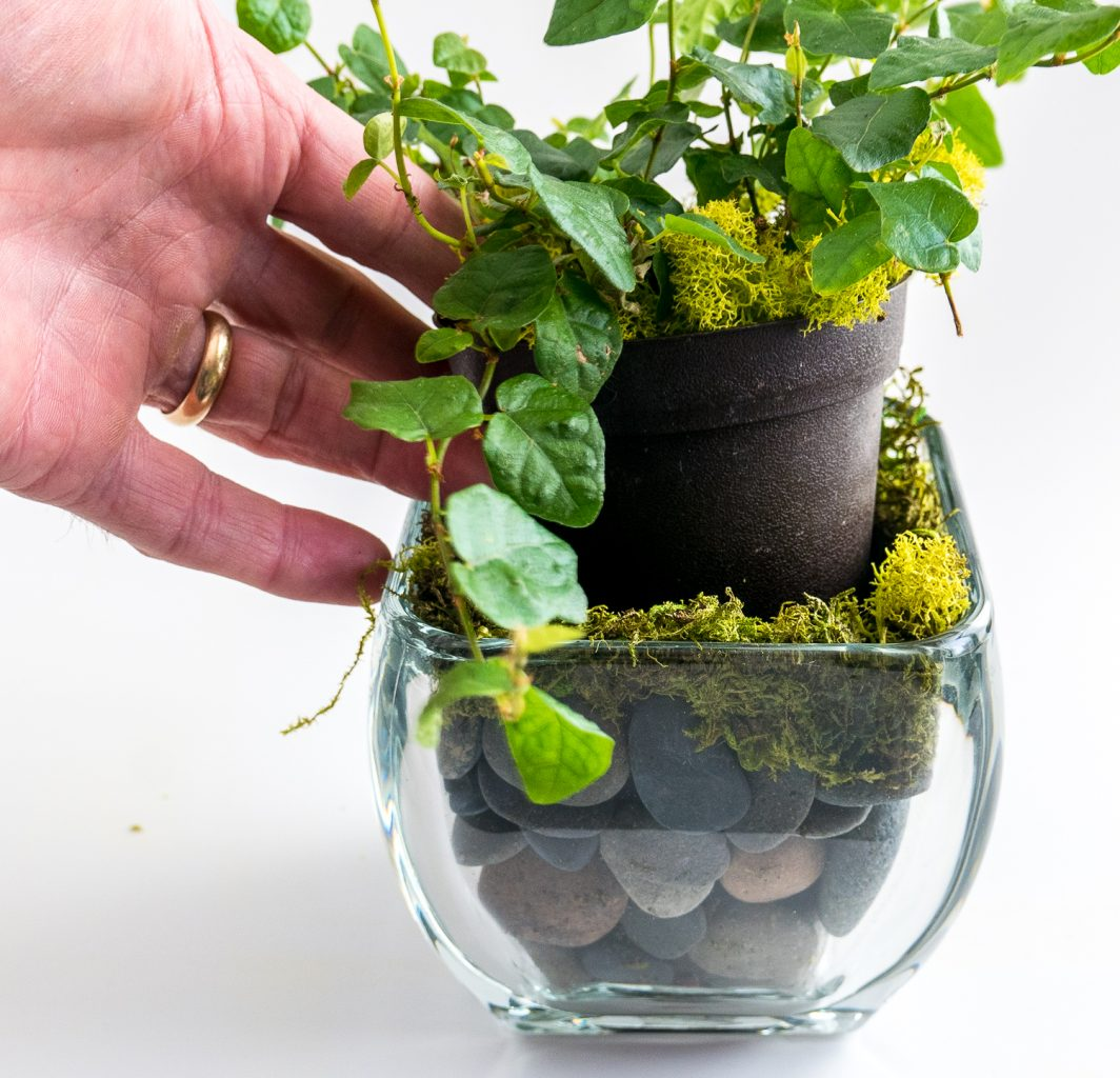 Travel and terrarium - inserting the plant