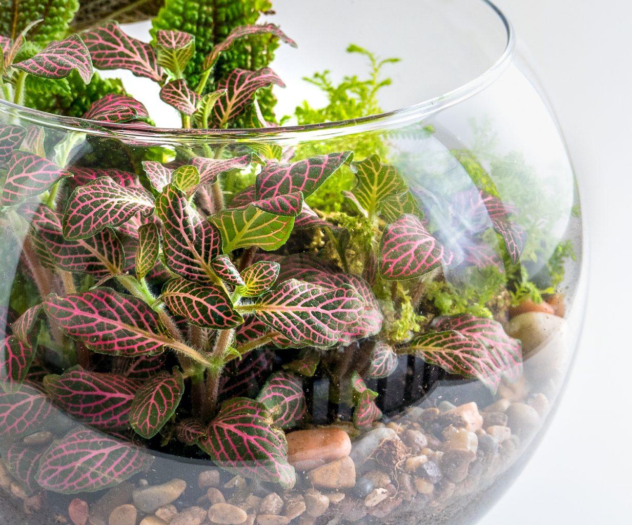 Travel and terrariums - detail of fishbowl terrarium