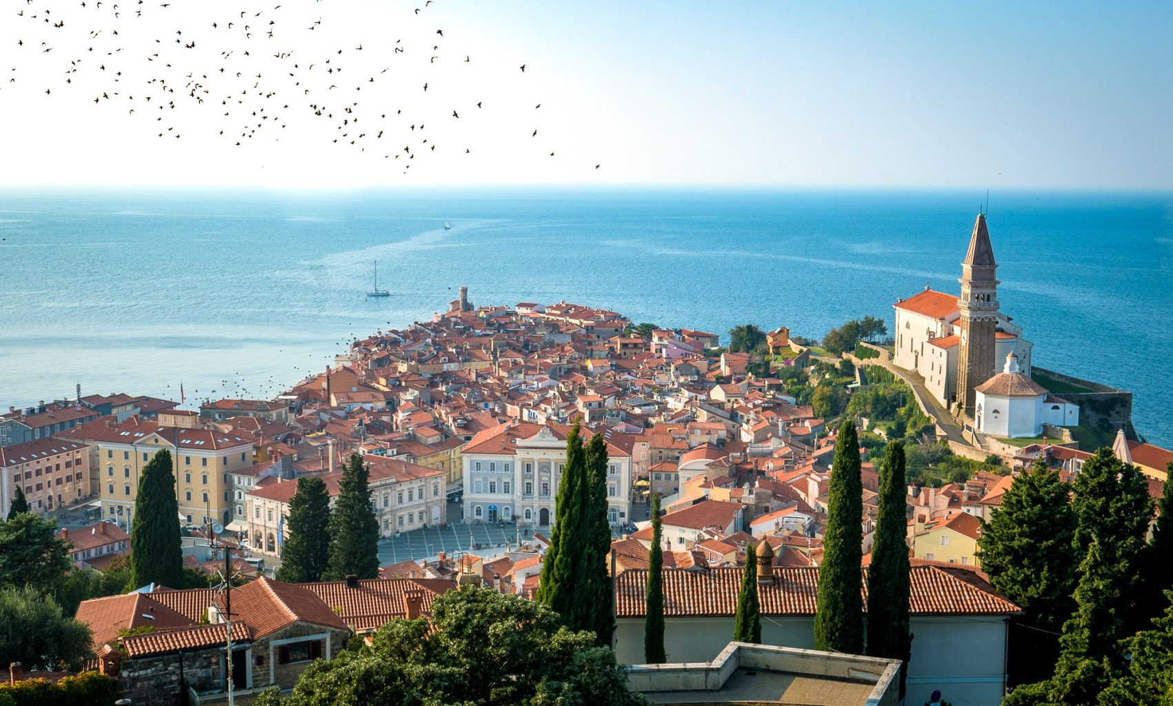 Piran from town wall with birds