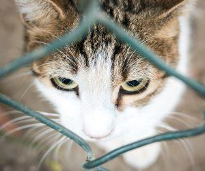 Five ways to improve your curiosity: cat