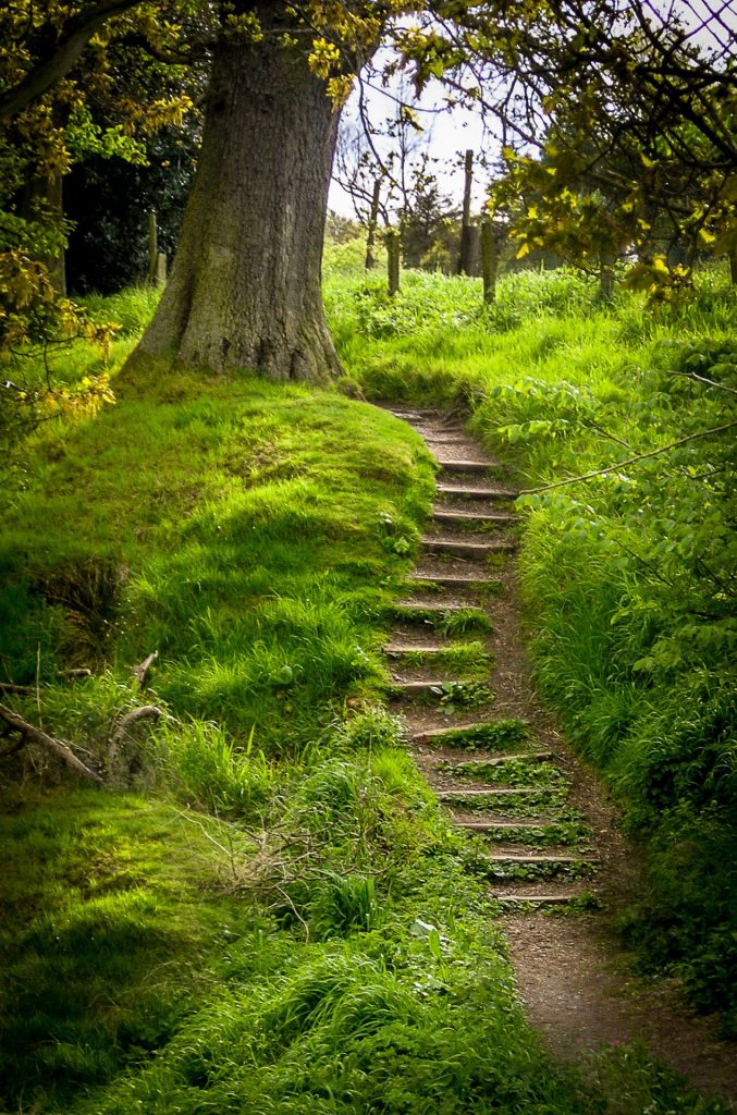 Hidden places - forest steps